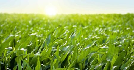 sustainable farming practices