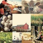 American Farmers Way of Life