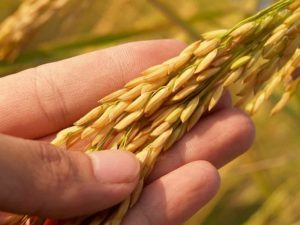 U.S. sustainable dry beans