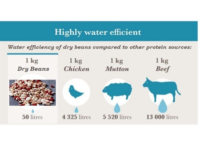 dry beans_water efficient