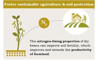 nitrogen fixing dry beans
