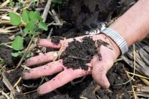 soil sustainability