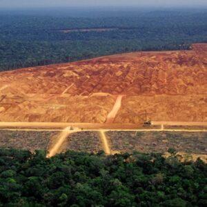 net zero deforestation