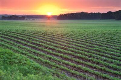 U.S. soybean sustainability