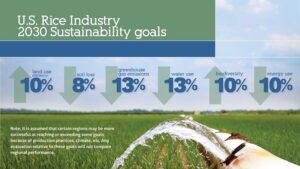 rice sustainability