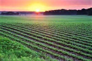 farming in U.S.